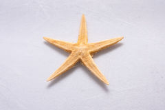 Starfish  in front of white background. Starfish  on white background Royalty Free Stock Images