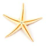 Starfish getrennt auf Weiß Stockbild