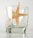 Starfish in glass Stock Photography