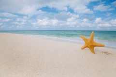 Starfish on golden sand beach with waves in  soft light Stock Photo