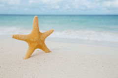 Starfish on golden sand beach with waves in  soft light Royalty Free Stock Photos