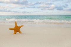 Starfish on golden sand beach with waves in  soft sunset light Royalty Free Stock Images