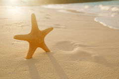 Starfish on golden sand beach with waves in  soft sunset light Stock Photo