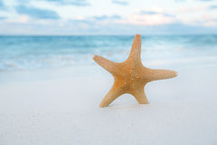 Starfish on golden sand beach with waves in  soft sunset light Stock Photography