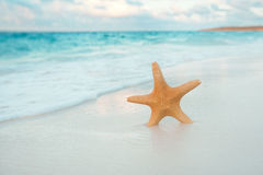 Starfish on golden sand beach with waves in  soft sunset light Royalty Free Stock Photography