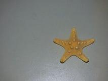 Starfish. On a gray backgroundn Stock Image