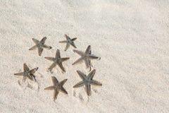 Starfish on gray sand Royalty Free Stock Image