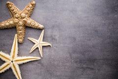 Starfish. Stock Image