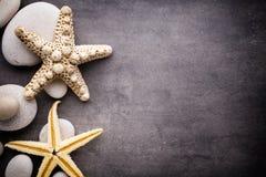 Starfish. Stock Images