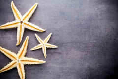 Starfish. Royalty Free Stock Images