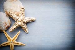 Starfish. Stock Photography