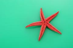 Starfish on green background Stock Image