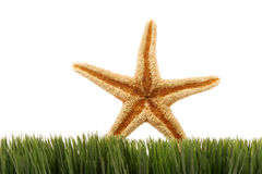 Starfish on green grass Stock Photography