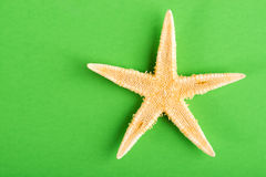 Starfish on green. Star fish on green background Royalty Free Stock Images