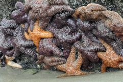 Starfish-Gruppe Stockbilder