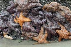 Starfish-Gruppe stockbilder