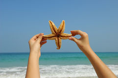Starfish and hand Royalty Free Stock Images
