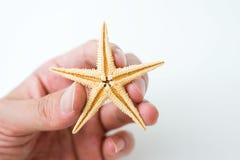 Starfish in hand Stock Photography