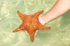 Starfish in hand Stock Images