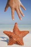 Starfish and Hand Royalty Free Stock Photo