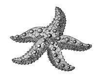 Starfish, hand drawn stylized ink vintage illustration
