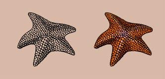 Starfish, hand drawn stylized vector illustration Stock Image