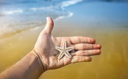 Starfish on the hand Stock Image