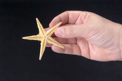 Starfish in the hand of man Stock Images