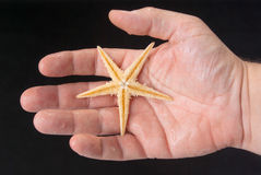 Starfish in the hand of man Royalty Free Stock Photography