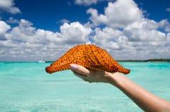 Starfish in hand Stock Photo
