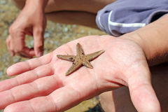 Starfish on hand Royalty Free Stock Image