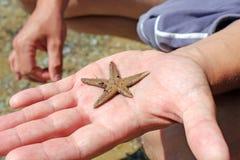 Starfish on hand Royalty Free Stock Image