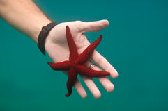 Starfish on the hand underwater Royalty Free Stock Images