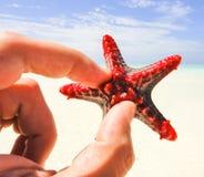 Starfish in hand. Zanzibar island. Tanzania Stock Images