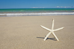 Starfish on the Hawaiian white sand tropical beach Stock Photography