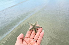 A starfish held in the palm of a hand Stock Photography