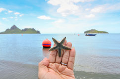 A starfish held in the palm of a hand on the beach Royalty Free Stock Image