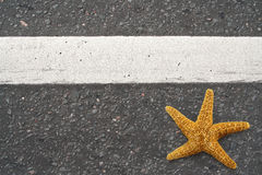 Starfish on the highway Stock Photography