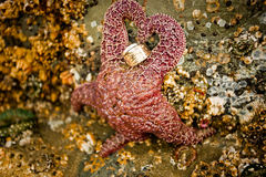 Starfish Holding Rings. Starfish holding wedding rings in the shape of a heart Stock Images