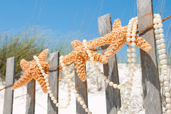 Starfish on holiday Royalty Free Stock Image