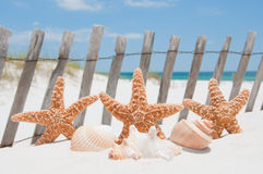 Starfish on holiday Stock Photo