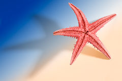 Starfish Holidays. Starfish with large shadow and limited DOF on light simulated beach background. You can see more of the same serie in my portfolio Stock Photos