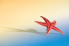 Starfish Holidays. Starfish with large shadow and limited DOF on a light simulated beach background. You can see more of the same serie in my portfolio Stock Photography