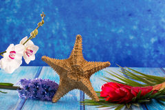 Starfish with hyacinth flower and white orchid on blue wood Stock Photography