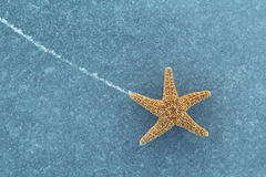 Starfish on ice Royalty Free Stock Photo