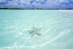 Starfish im klaren Wasser Stockfotografie