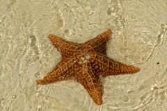 Starfish In Water Stock Photo