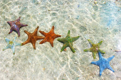 Starfish. In the Indian Ocean Stock Photography
