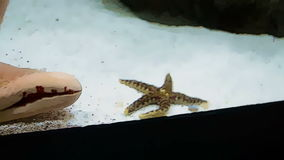 Starfish inside water glass in cartoon form. Starfish inside water glass in the Aquarium in cartoon form stock video footage