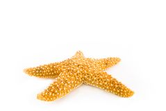 Starfish (isolados no branco) Fotografia de Stock Royalty Free